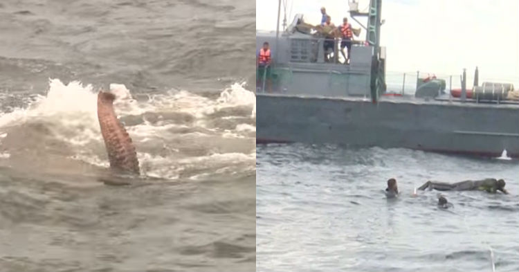 Ship Crew Notices Animal In Water That Shouldn't Be There And Is Drowning, Takes Swift Action