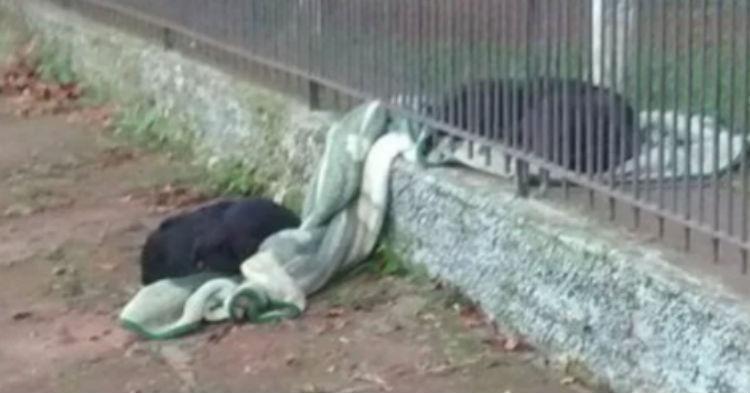 Puppy Drags Her Favorite Blanket Outside To Homeless Dog To Keep Her Warm At Night