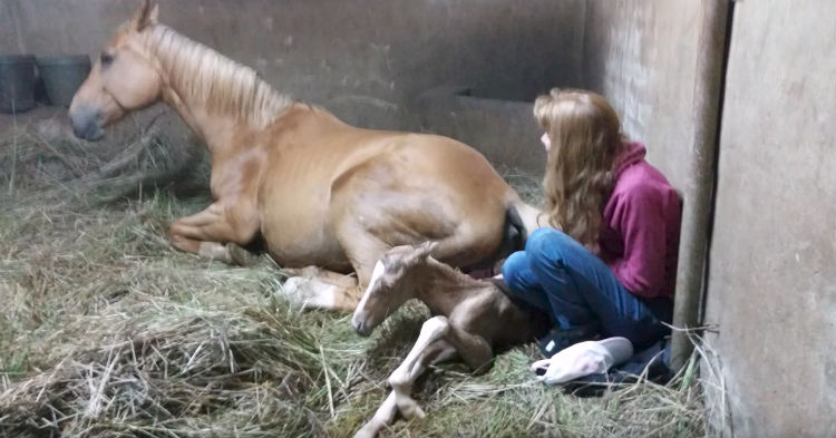 Horse Finally Gives Birth To Foal Seven Days Overdue, Then They Notice She Starts Acting Odd