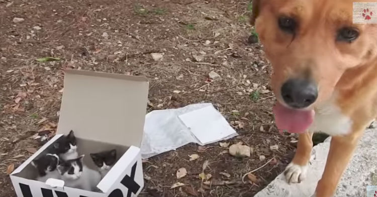 No One Is Surprised Loving Dog Found Abandoned Kittens, It's What He Did After That Went Viral
