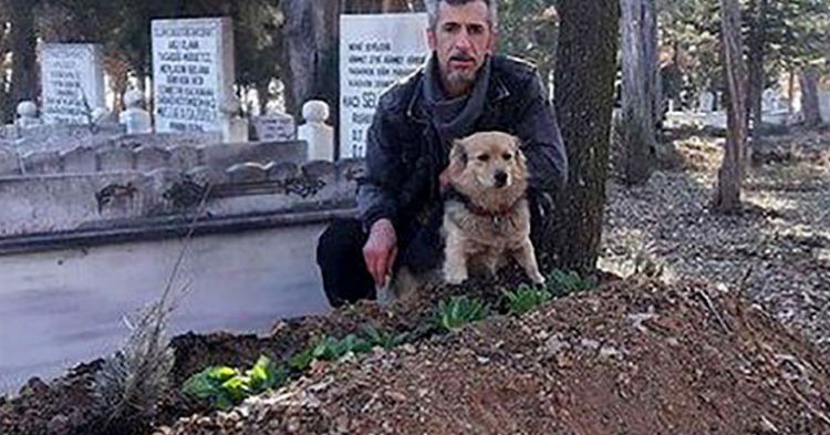 Crew Was Confused Why Dog Showed Up At Grave Everyday, Then They learn Who Was Buried There