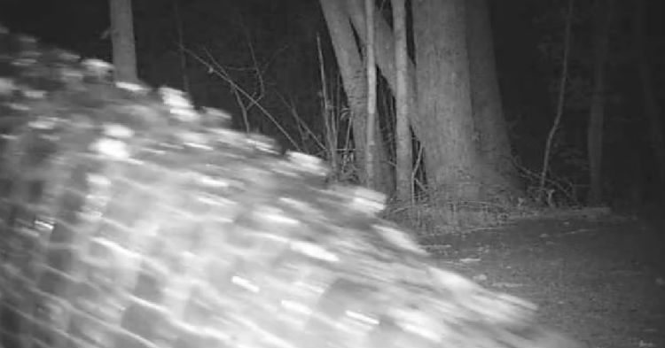 Park's Wildlife Trail Camera Captures What Many Are Calling The Largest One In America