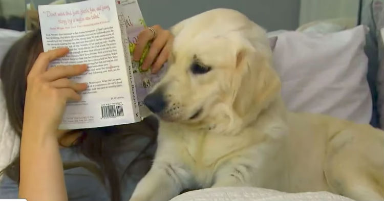 Owners Who Let Their Dogs On Their Bed Should Take Note Of Scary Study. It Could Save Your Life