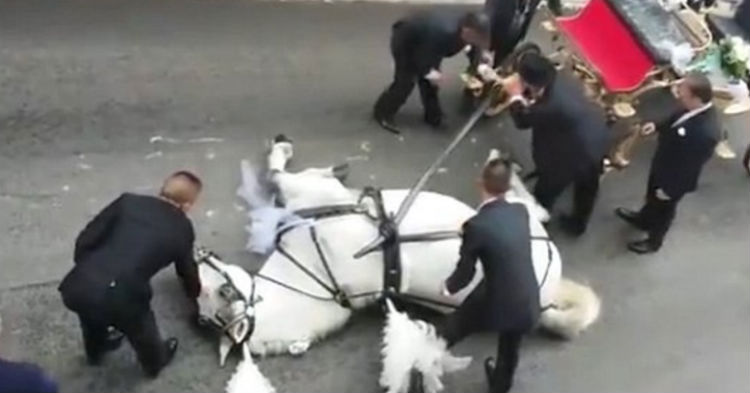 Horse That's Forced To Pull Carriages, Collapses From Exhaustion. Do You Support Banning This?