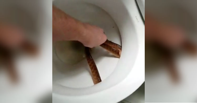 Mom Knows Something Is Very Wrong. Worker Comes And Yanks Utter Nightmare Hiding In Toilet