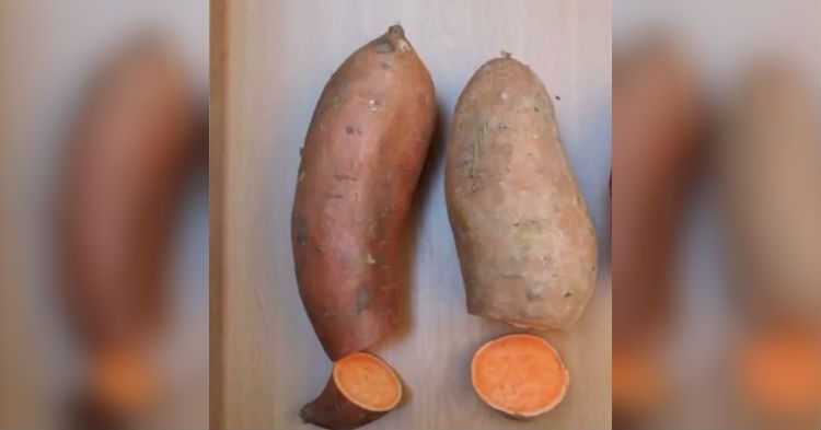 Most Don't Know What The Differences Between Yams And Sweet Potatoes Are, Do You?